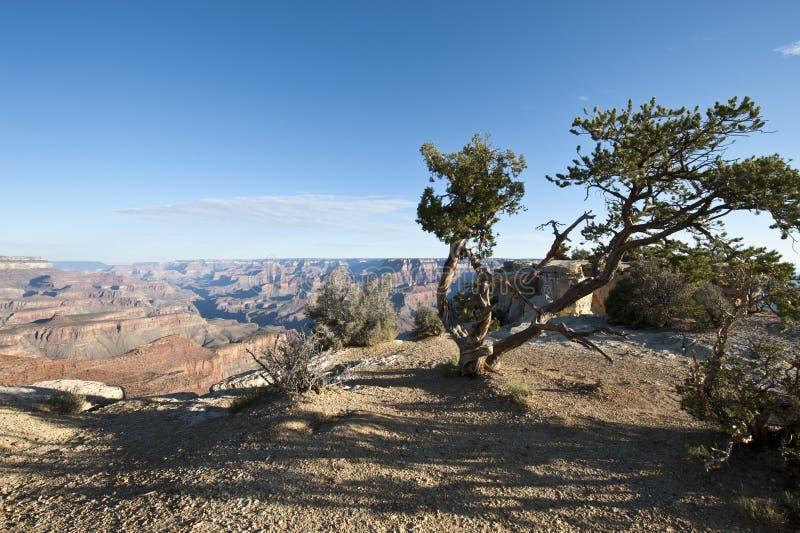Canyon grand, Amérique image libre de droits