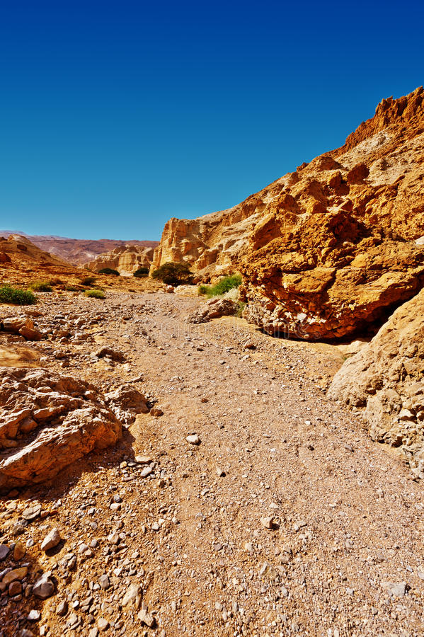 Canyon. In the Judean Desert on the West Bank stock photography