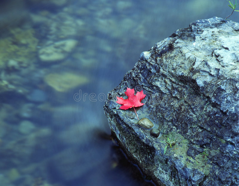 Download Canyon Maple Leaf stock photo. Image of water, autumn, maple - 461950