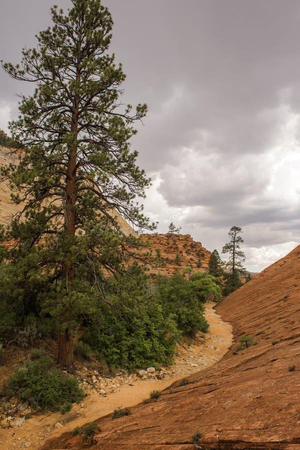 Canyon national de parc-Zion d'UT-Zion images stock