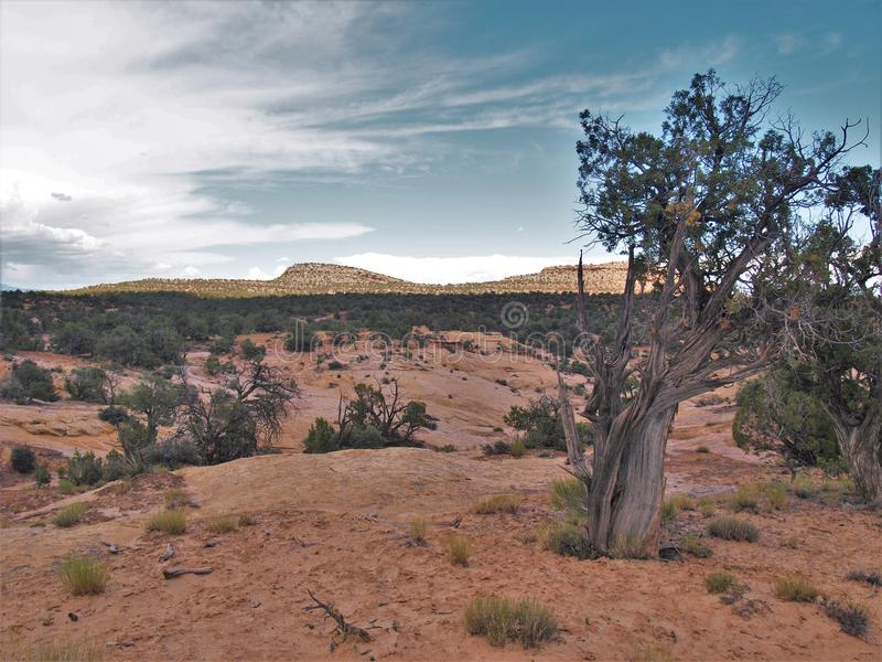 Canyon Rims Recreation Area. An outdoor lovers playground, includes 100,273 acres south of Moab in southern Utah royalty free stock photos