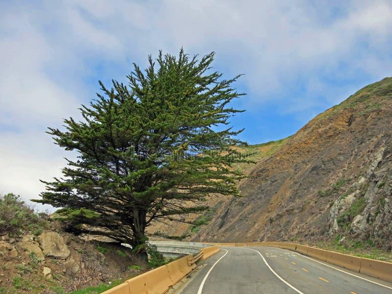 Canyon Road med trädet fotografering för bildbyråer