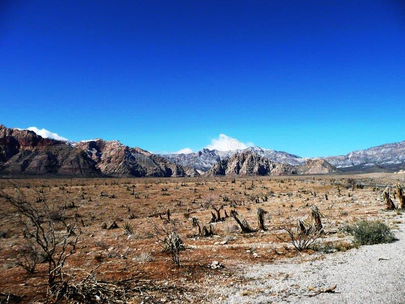 Canyon rosso della roccia del deserto del Nevada fotografia stock