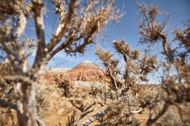 Canyon rosso nel deserto fotografia stock libera da diritti