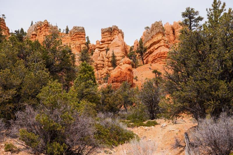 Canyon rosso nella foresta nazionale di Dixie fotografie stock libere da diritti
