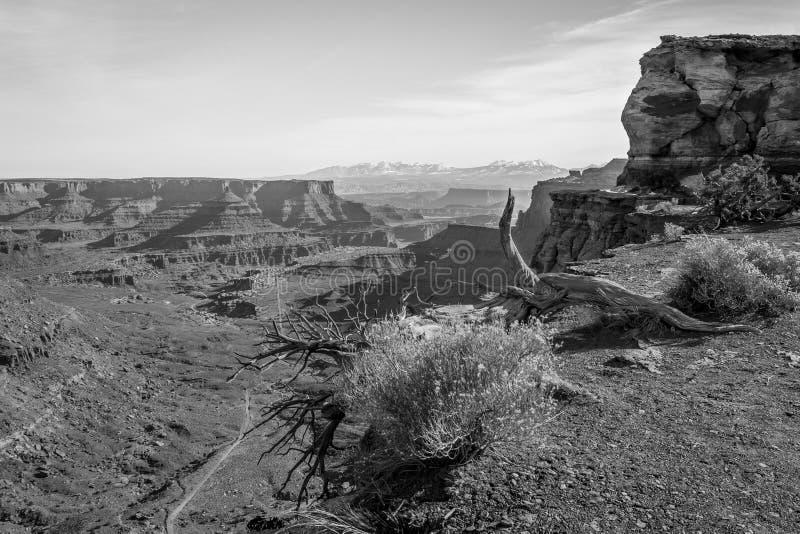Canyonlands图B&W 免版税库存图片