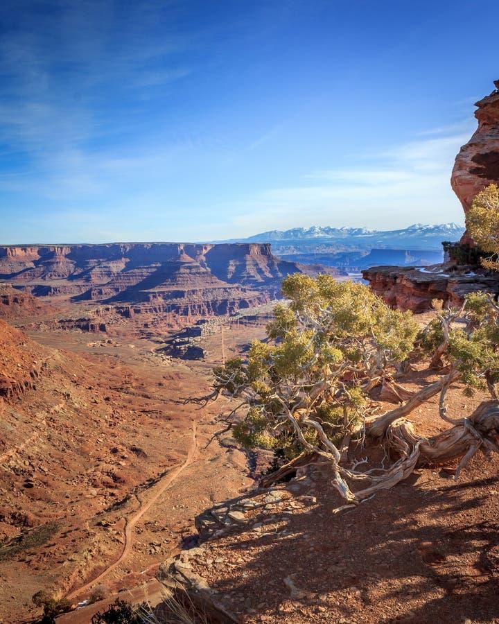 Canyonlands视图垂直 图库摄影