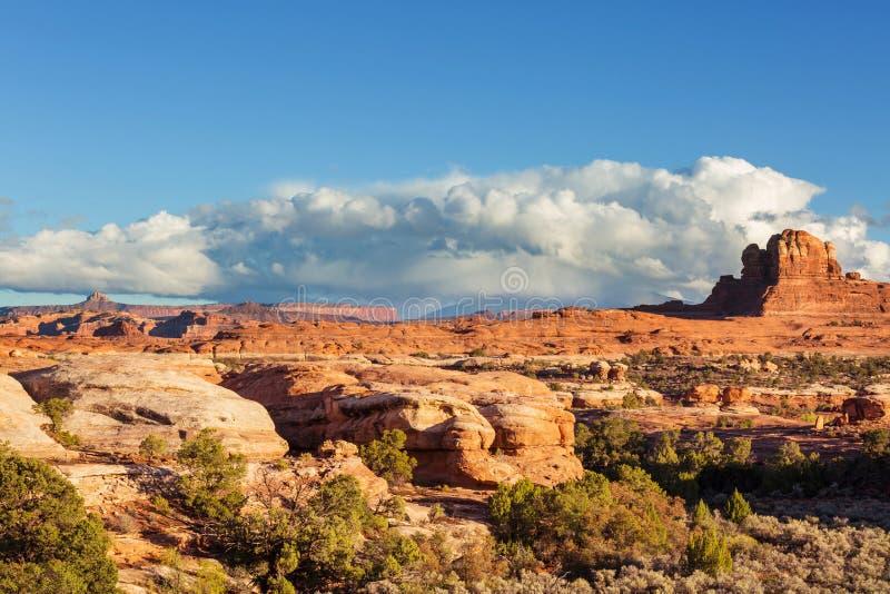 Canyonlands obrazy royalty free