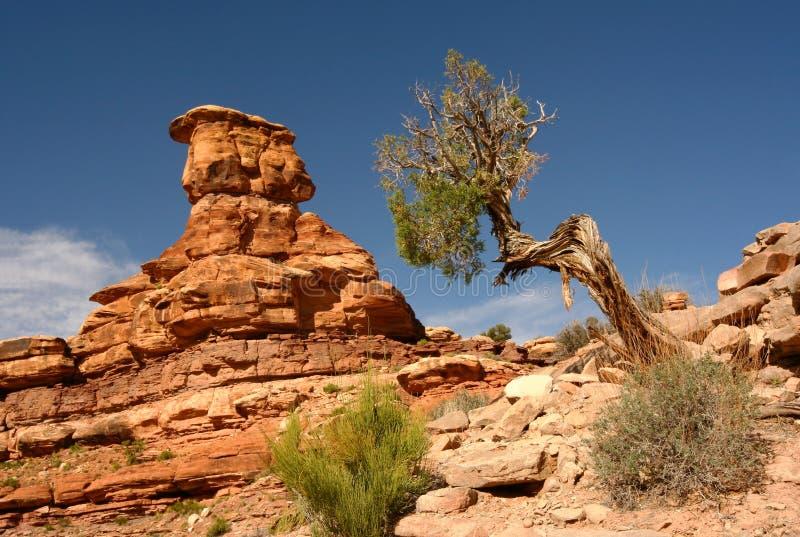 Download Canyonlands Formation And Desert Juniper Stock Image - Image: 20785081