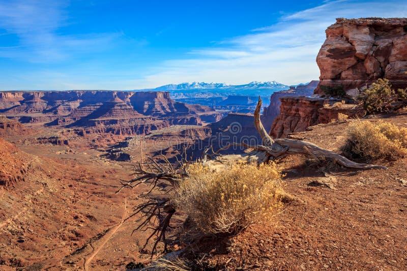 Canyonlands sikt royaltyfri foto