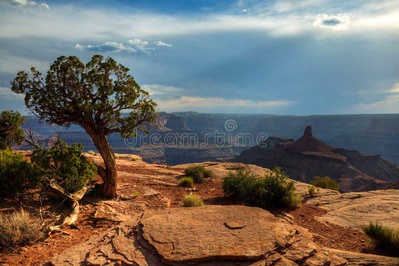 Canyonlands vom im Voraus bezahlte Leistungs-Punkt lizenzfreie stockbilder