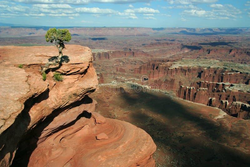 canyonlandssikt fotografering för bildbyråer