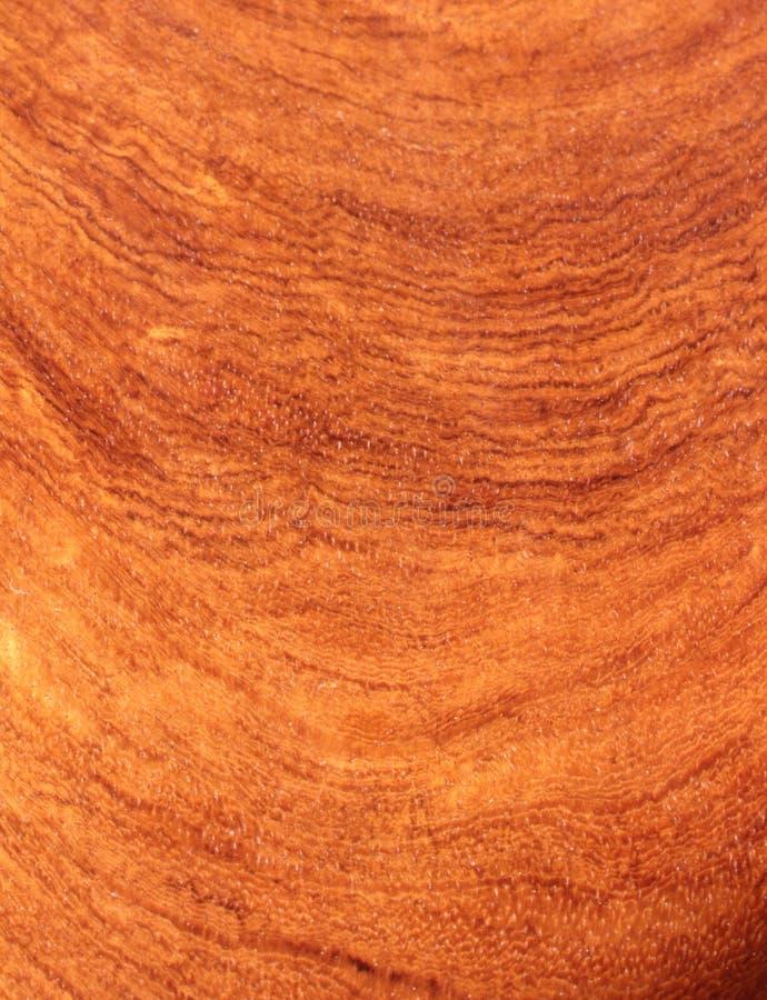 Caoba, textura del palo de rosa foto de archivo libre de regalías