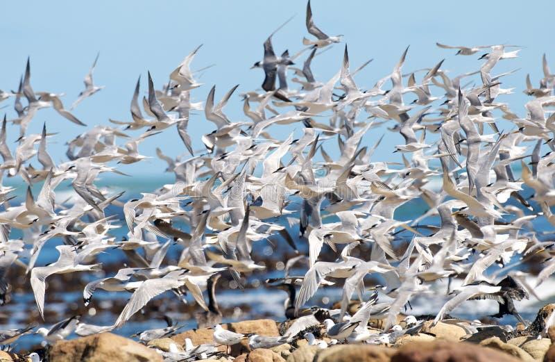 Caos dell'uccello di mare fotografie stock libere da diritti