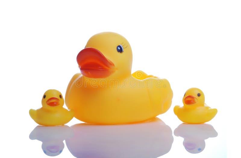 caoutchouc de famille de canard images libres de droits