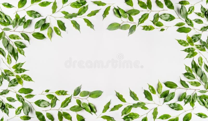 Capítulo bonito hecho de ramas y de hojas verdes en el fondo blanco Endecha plana, visión superior, horizontal foto de archivo libre de regalías