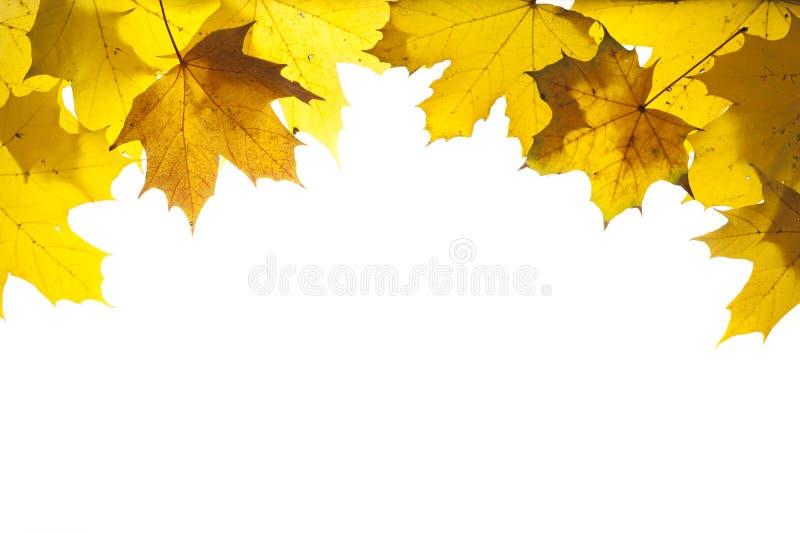 Capítulo con las hojas coloridas en el otoño imagen de archivo libre de regalías