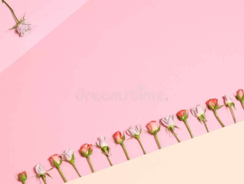 Capítulo con las rosas Rosas blancas rosadas Fondo rosado del día de fiesta foto de archivo