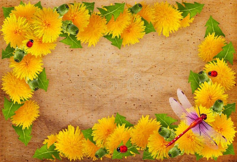 Capítulo de flores foto de archivo