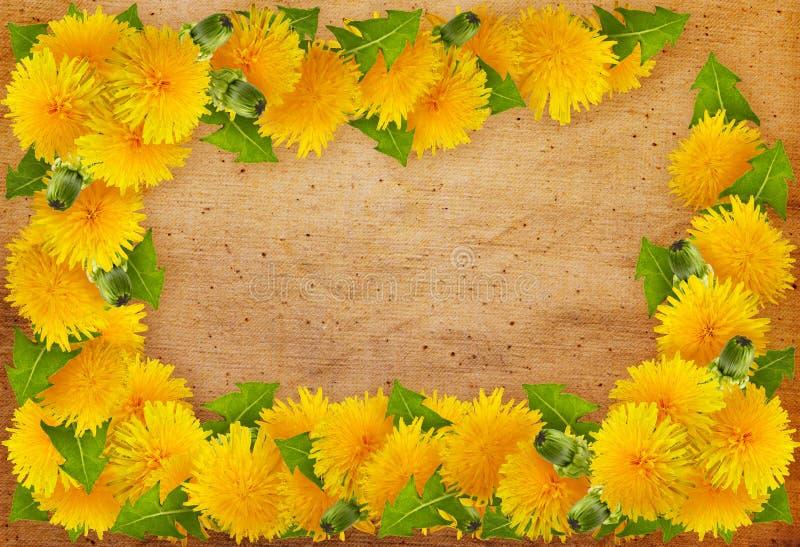 Capítulo de flores foto de archivo libre de regalías