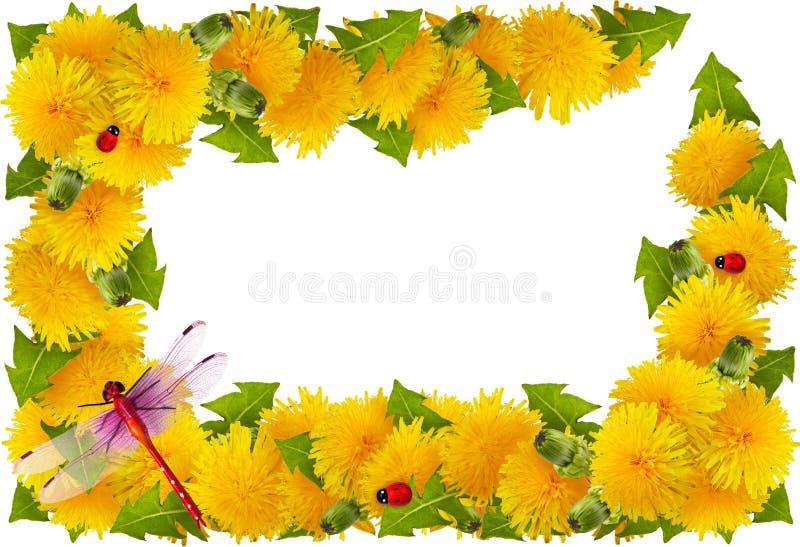 Capítulo de flores imágenes de archivo libres de regalías