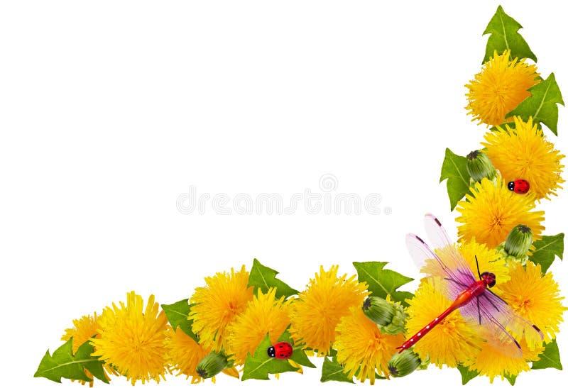 Capítulo de flores fotografía de archivo