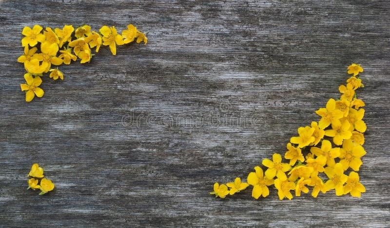 Capítulo de flores amarillas en un fondo de madera imagen de archivo