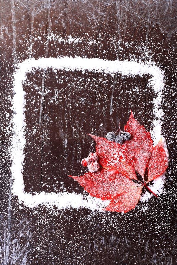 Capítulo de la nieve con una hoja roja en un folleto nevoso del invierno del fondo de madera oscuro imágenes de archivo libres de regalías
