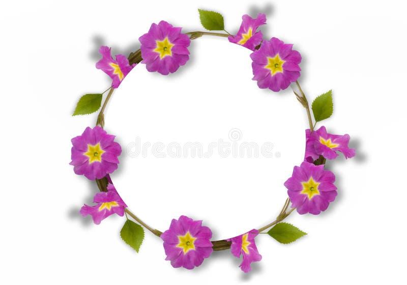 Capítulo de la primavera rosada, hojas verdes, ramas en el fondo blanco Endecha plana, visión superior Modelo floral Modelo de libre illustration
