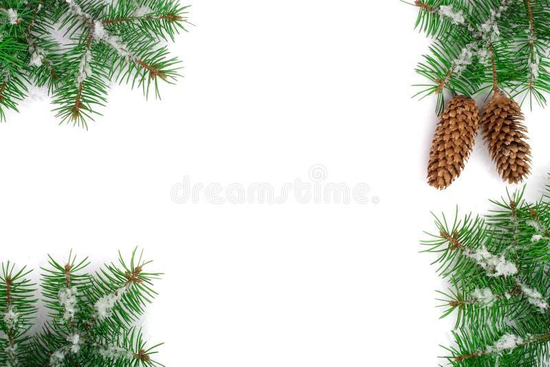 Capítulo de la rama de árbol de abeto con nieve y del cono aislado en el fondo blanco con el espacio de la copia para su texto Vi imágenes de archivo libres de regalías