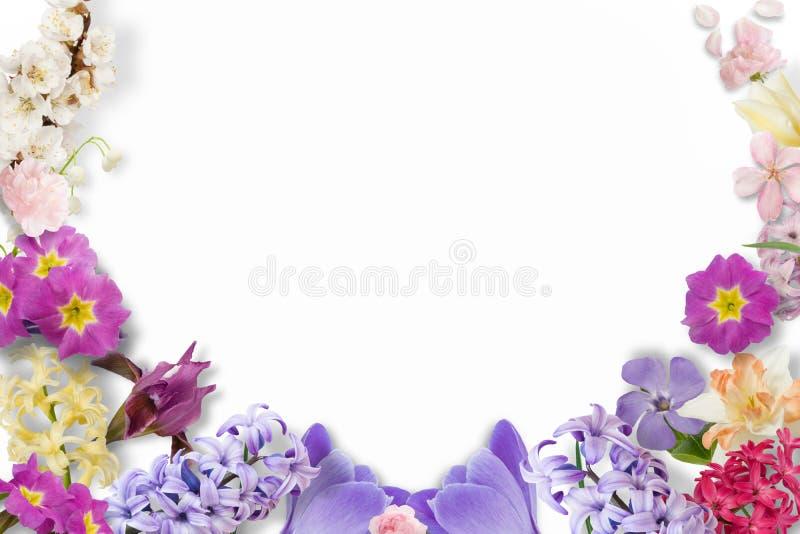 Capítulo de las flores multicoloras, hojas verdes, ramas en el fondo blanco Endecha plana, visión superior Modelo floral Modelo stock de ilustración