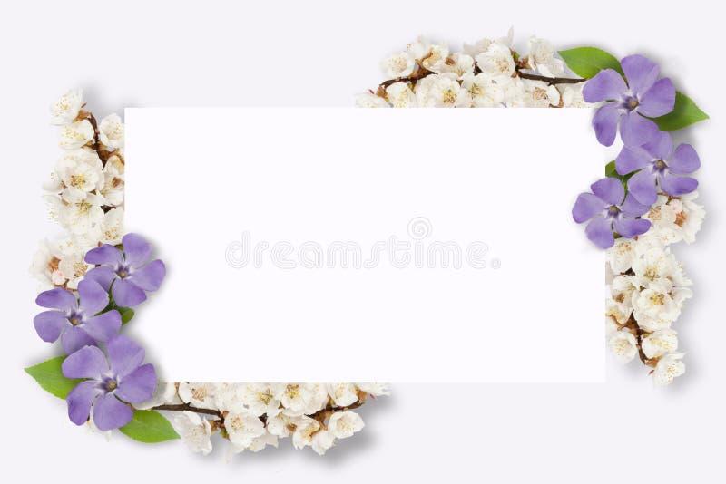 Capítulo de las flores multicoloras, hojas verdes, ramas en el fondo blanco Endecha plana, visión superior Modelo floral Modelo ilustración del vector