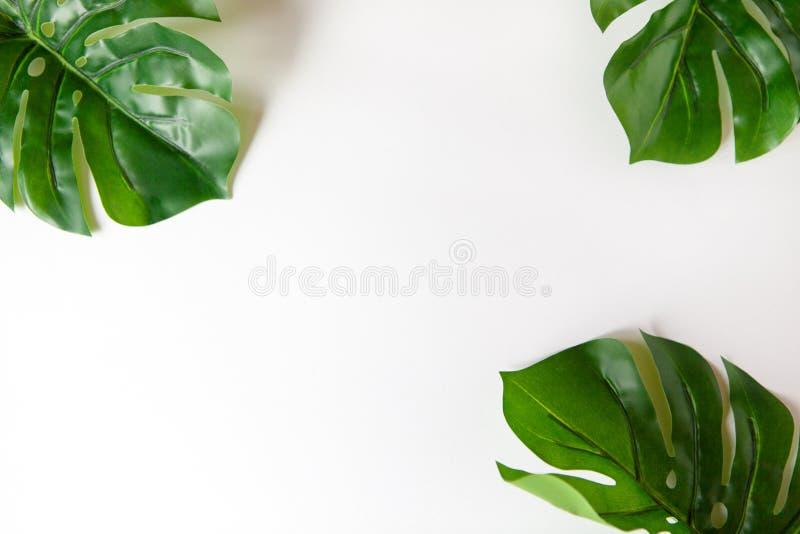 Capítulo de las hojas de Monstera en el fondo blanco con el espacio de la copia Endecha del plano del minimalismo Para el blog de imagen de archivo libre de regalías