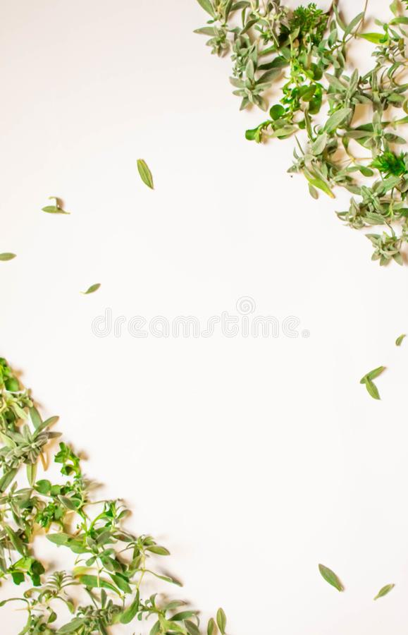 Capítulo de las ramas verdes, hojas en un fondo blanco Endecha plana, visión superior libre illustration