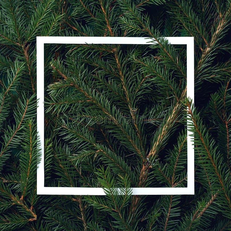 Capítulo de las ramificaciones del árbol de navidad fotografía de archivo