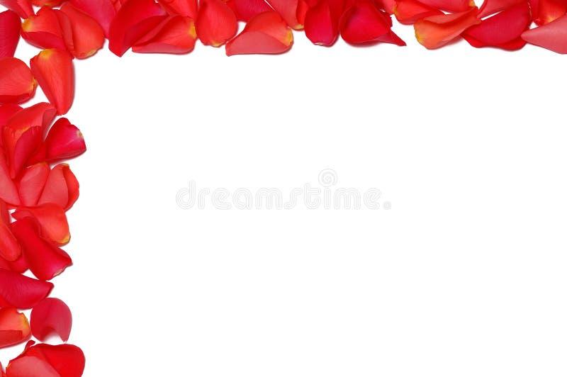 Capítulo de los pétalos color de rosa imagen de archivo libre de regalías