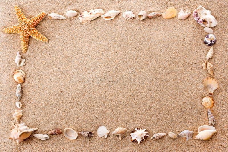 Capítulo de seashells fotos de archivo libres de regalías