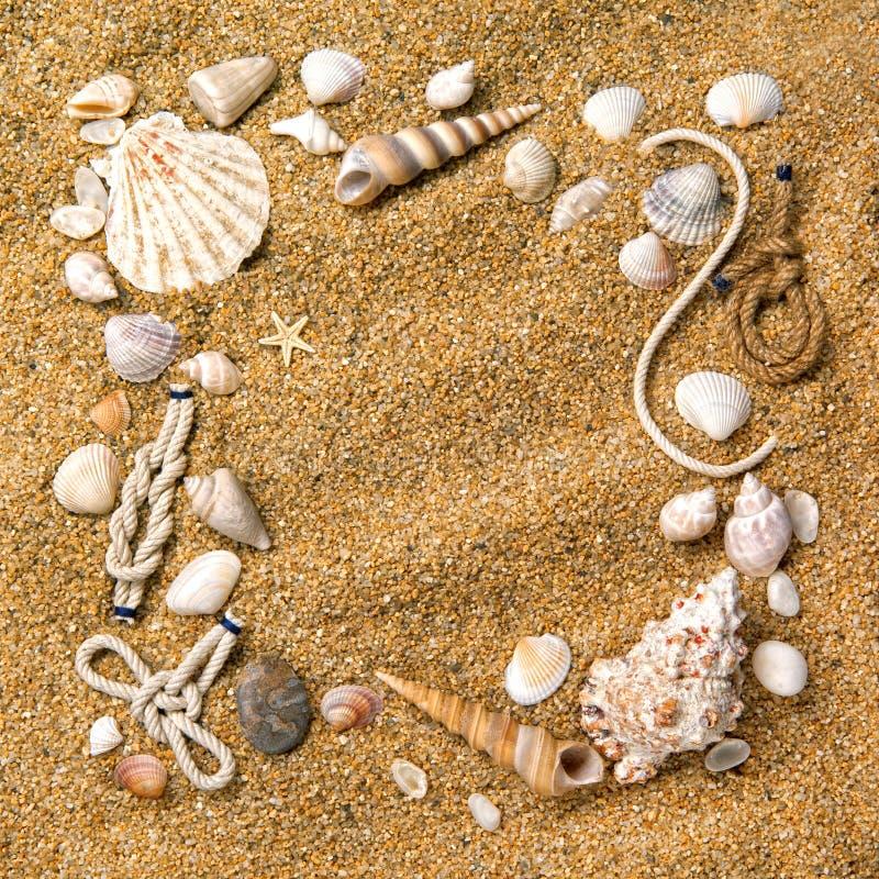 Capítulo de varios shelles en la arena imágenes de archivo libres de regalías