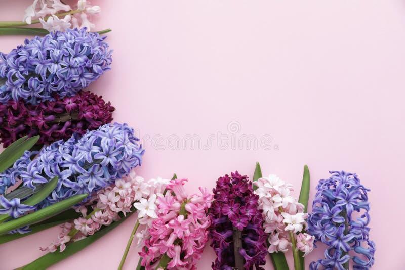 Capítulo hecho de las flores del jacinto de la primavera en fondo del color fotografía de archivo libre de regalías