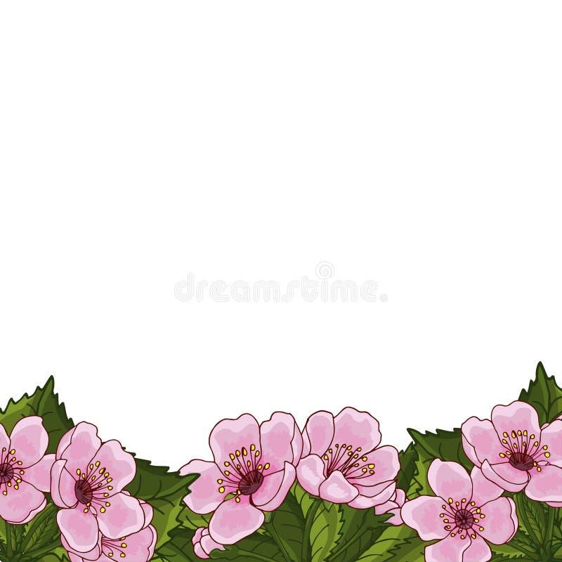 Capítulo para el texto con las flores de la primavera de la cereza rosada, Sakura, en un fondo blanco Idea para la postal del dis ilustración del vector