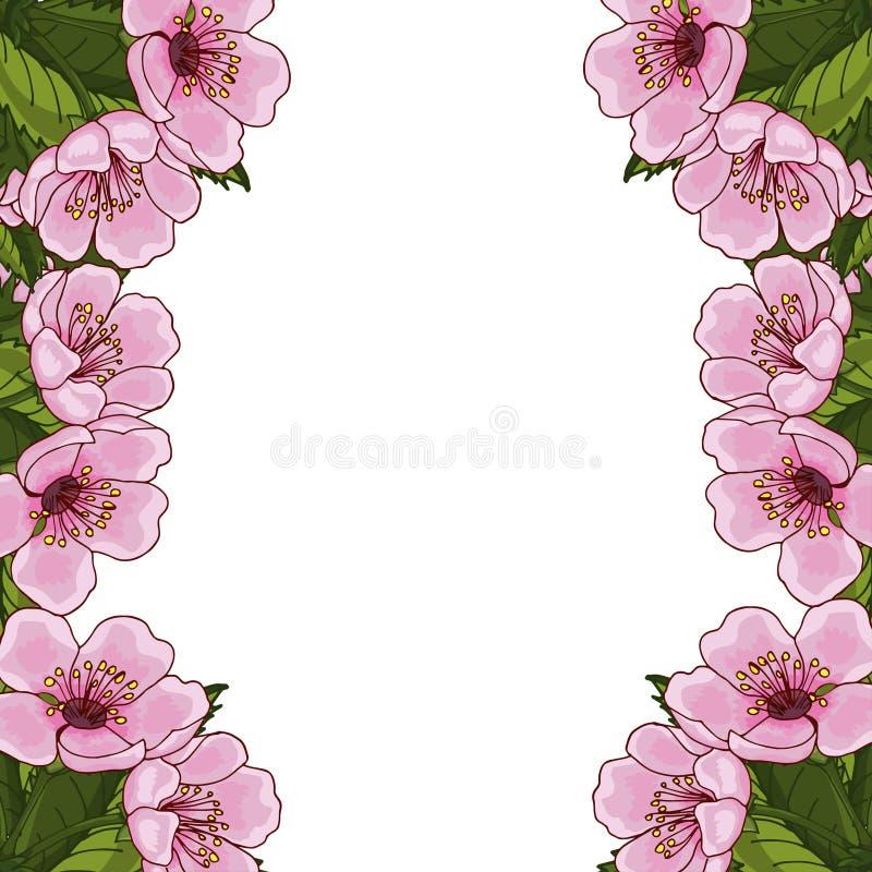 Capítulo para el texto con las flores de la primavera de la cereza rosada, Sakura, en un fondo blanco Idea para la postal del dis stock de ilustración