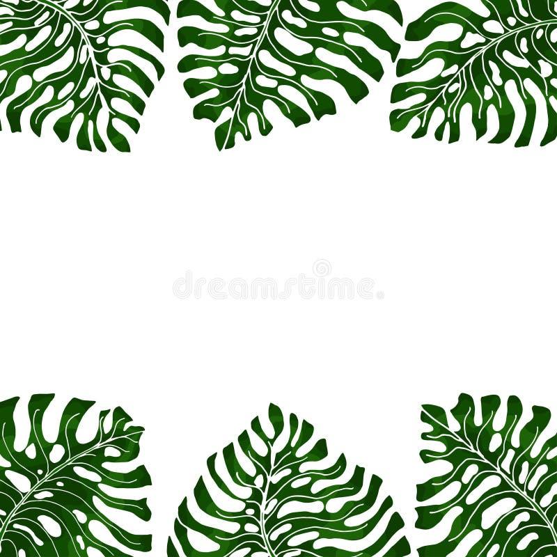 Capítulo para el texto con un fondo blanco y monsteras exóticos verdes de las hojas que cuelgan a partir de dos lados Idea para e ilustración del vector