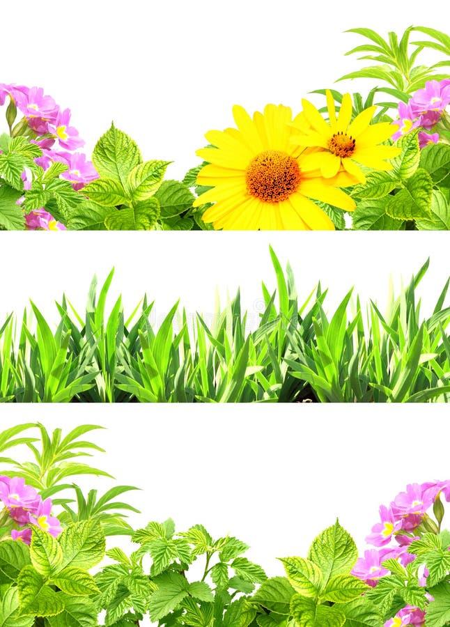 Capítulos con las flores del verano y la hierba verde imagen de archivo
