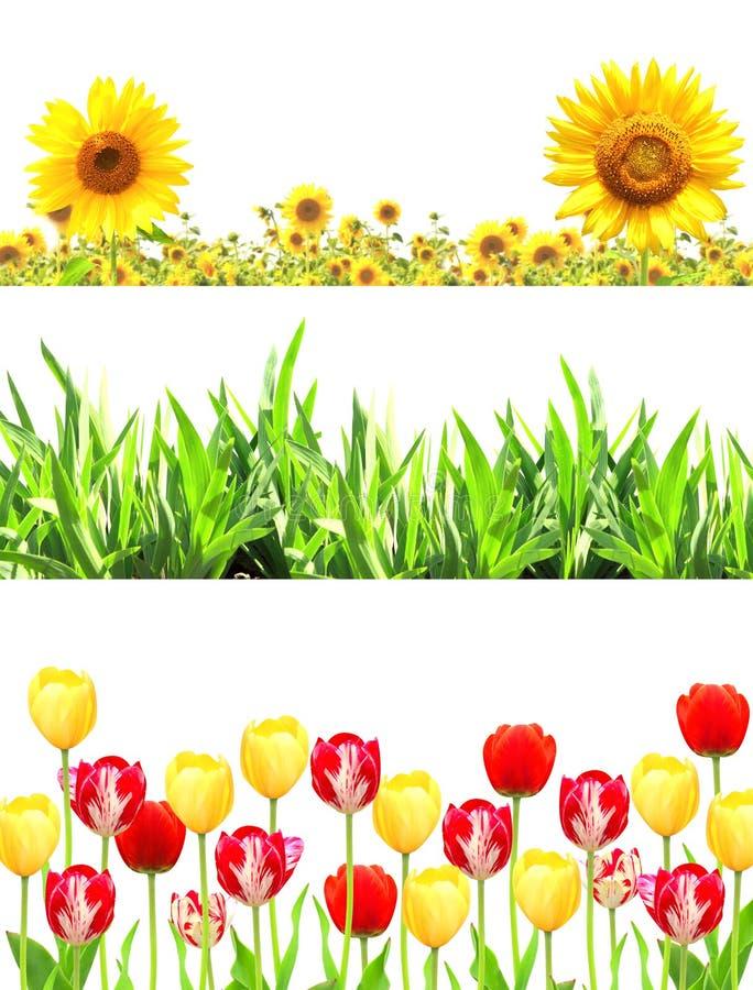 Capítulos con las flores y la hierba verde fotografía de archivo libre de regalías
