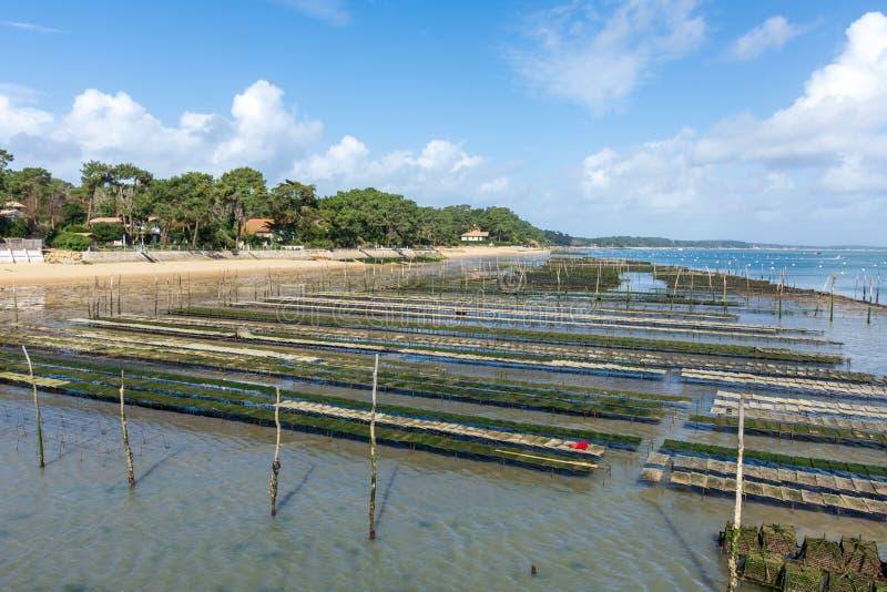 Cap Ferret, Arcachon-Bucht, Frankreich Austernbanken nahe dem Strand lizenzfreies stockbild