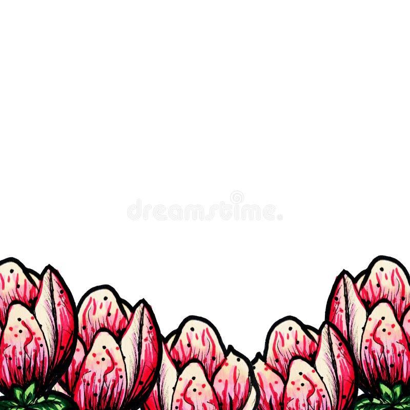 Cap?tulo de la magnolia floreciente en un fondo blanco aislado Lugar para el texto Decoraci?n por un d?a de fiesta Florezca el ma stock de ilustración