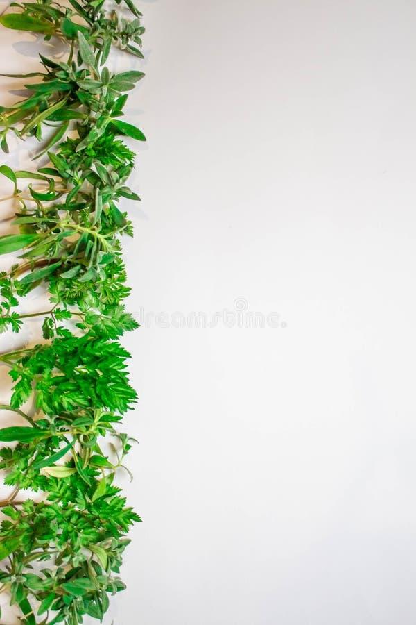 Cap?tulo de las ramas verdes, hojas en un fondo blanco Endecha plana, visi?n superior libre illustration