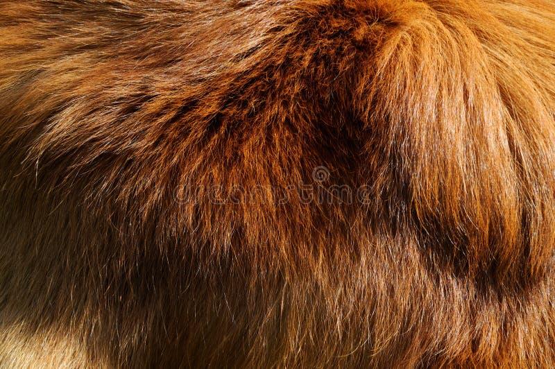 Capa del perro imágenes de archivo libres de regalías