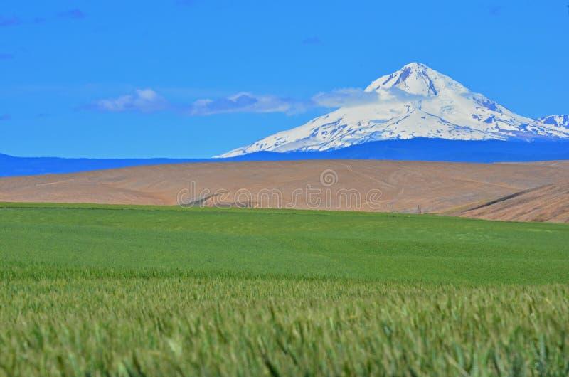 Capa do Mt que eleva-se acima imagem de stock