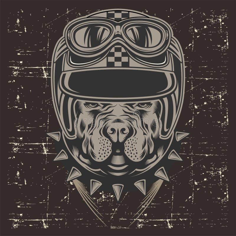 Capacete vestindo retro, vetor do pitbull do estilo do Grunge do desenho da mão ilustração do vetor